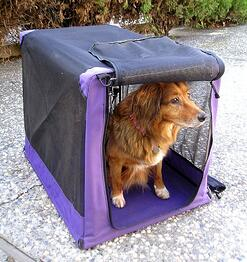 Traveling with a pet can be difficult for both owner and pet